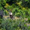 Monfragüe Nationalpark