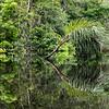 Guyabeno River