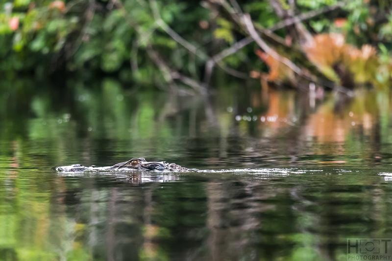 Guyabeno Reserve, Amazonas