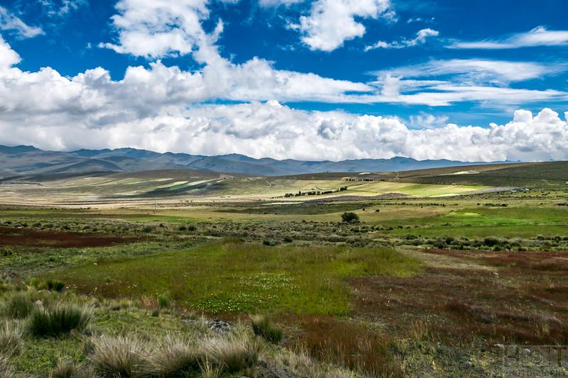 Im Chimborazo Reserve, auf über 4000 m Höhe