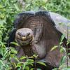 Die Riesenschildkröten von San Christóbal