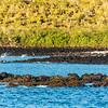Pelikane am Fischen