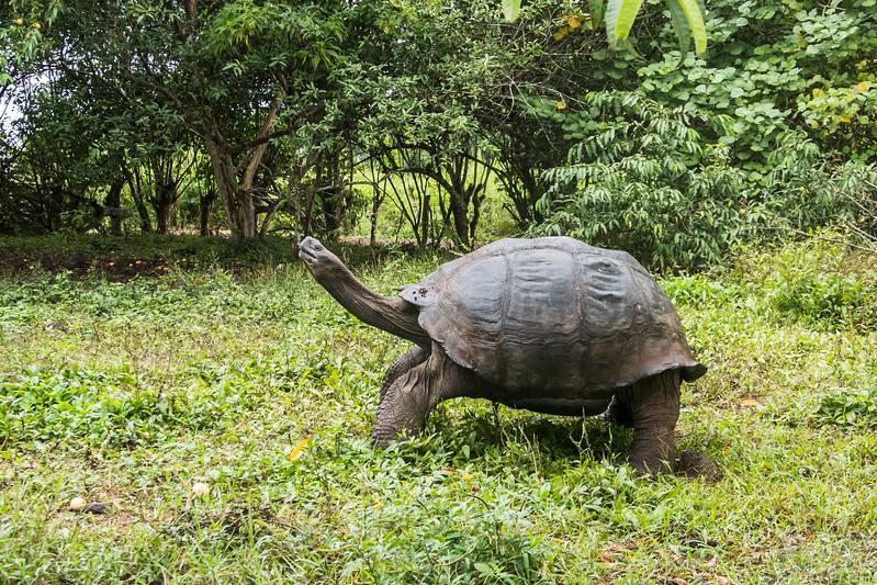 El Chato - Giant Toroise Reserve