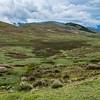Lamas und Schafe weiden auf 4000 m