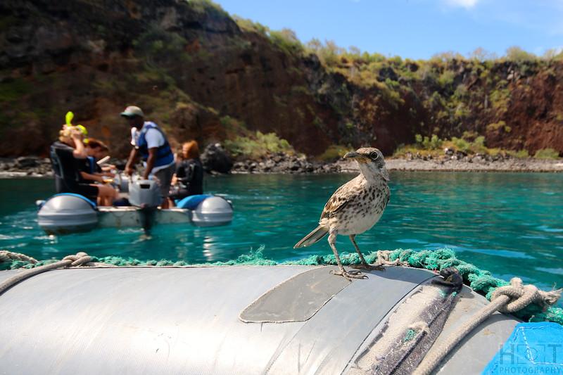 Schnorcheln bei der Isla Gardner