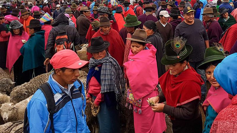 Markttag in Guamote, Viehmarkt