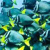 Tiefwasser-Schnorcheln bei der Isla Champion