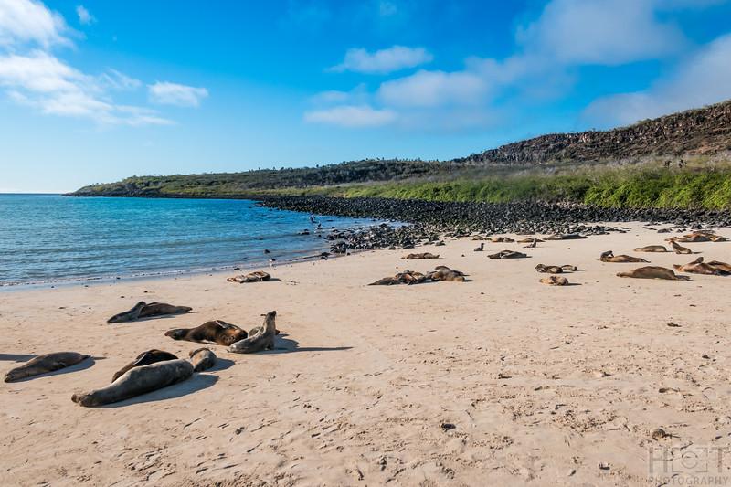 Barrington Bay mit Seelöwen