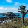 Opuntien Baum mit Barrington Bay