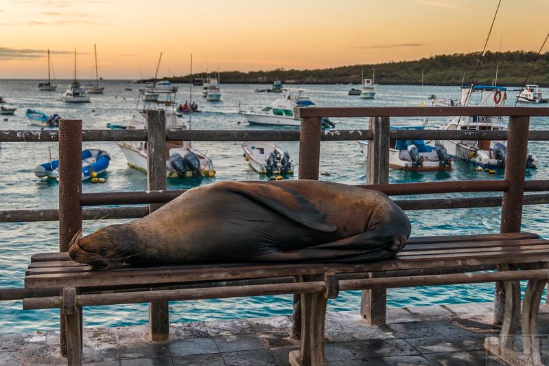 Die Seelöwen fühlen sich hier zuhause