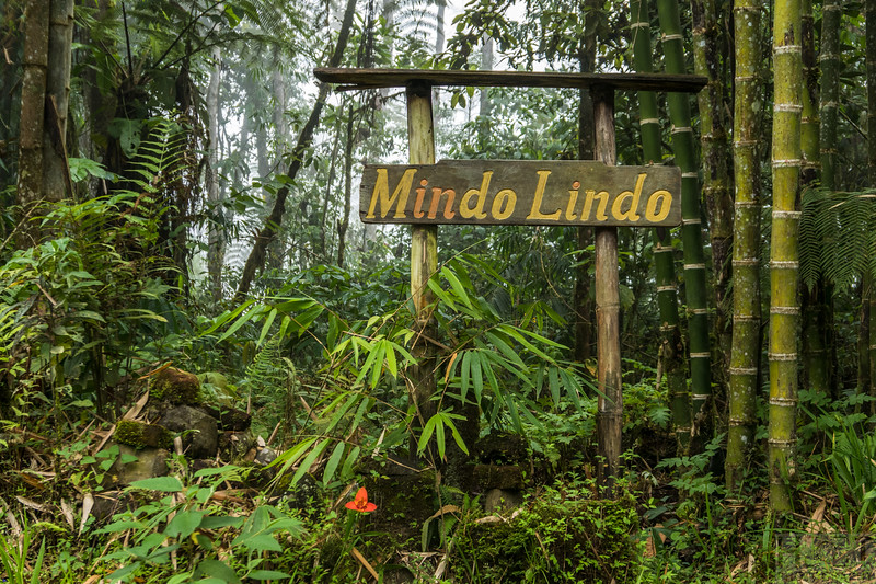Mindo Lindo