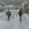 Das Lama will nicht so wie die Hirtin