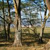 Lake Nakuru sees i bakgrunnen.
