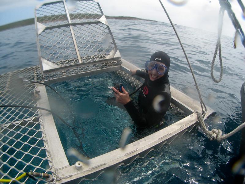 På vei ned i haiburet.