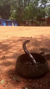 Snake Sri Lanka
