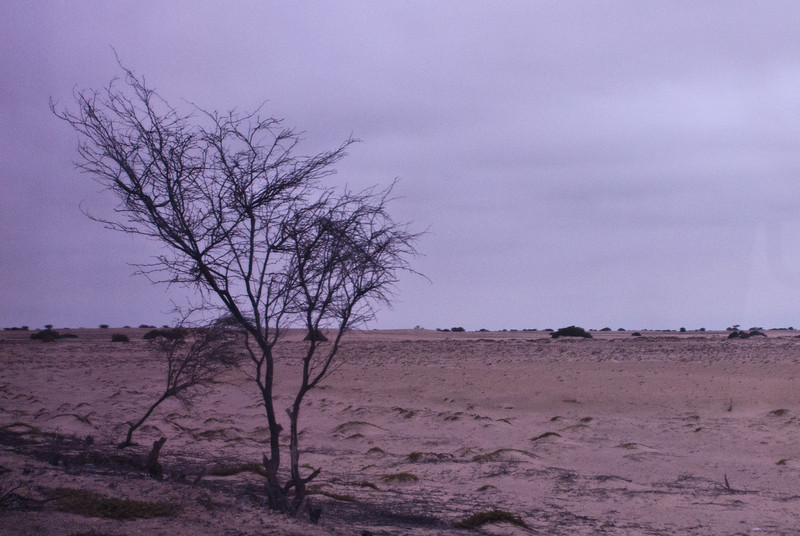 De onherbergzame woestijn die de kustlijn van Peru vormt (2.250 Km van noord tot zuid of omgekeerd) sporadisch onderbroken door een stad, dorp of gehucht. <br /> Vrijwel de enige bomen die je onderweg ziet zijn algarrobos (johannesbroodboom) waarvan het hout voor van alles en nog wat gebruikt wordt. Van de hars wordt ook een siroop gemaakt dat veel gebruikt wordt in Peruviaanse cocktails waaronder de algarrobina. <br /> Hier zie je een dood of jong exemplaar dat ik niet van dichtbij ben gaan bestuderen. <br /> <br /> Panamerikaanse snelweg - Ergens tussen Tumbes & Piura - Peru <br /> Vrijdag 10 augustus '12