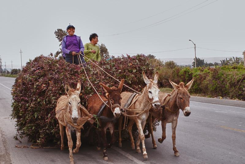 Concurrentie.<br /> <br /> San Vicente de Cañete - Panamericana Sur - Lima - Peru<br /> Zondag 12 augustus '12