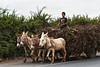 Zeer rendabel vrachtvervoer wat aankoop en verbruik betreft ergens op de weg tussen Cañete en Luanhuaná.<br /> Zondag morgen of niet, landbouwers werken net als in België alle dagen in dit derde wereldland in volle expansie. <br /> <br /> San Vicente de Cañete - Panamericana Sur - Lima - Peru<br /> Zondag 12 augustus '12