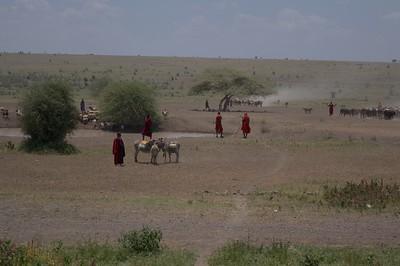 Masai Shepherds gathering around drinking pool