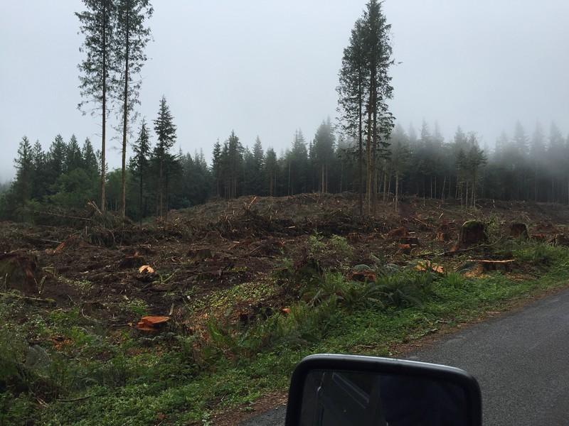 Reiter Rd, Reiter Foothills Forest. Clear cut devastation.