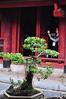 Temple of Literature - Vietnams første universitet stammer fra omkring år 1000