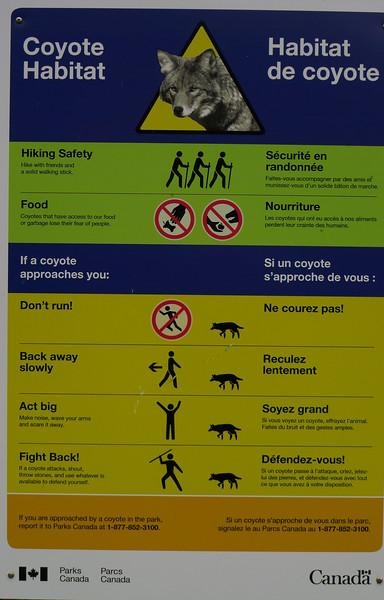 hike... prærieulvene var de mindst farlige dyr vi kunne møde...