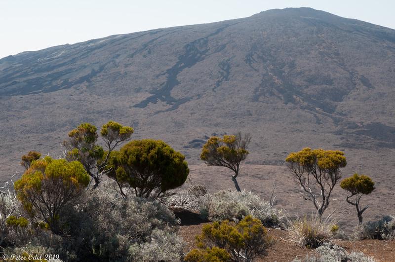 Piton de la Fournaise - en af verdens mest aktive vulkaner!