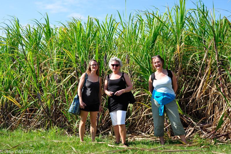 damer i sukkerrørene!