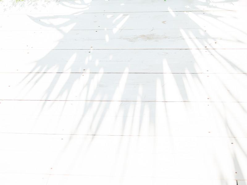 Palms 16x12-7