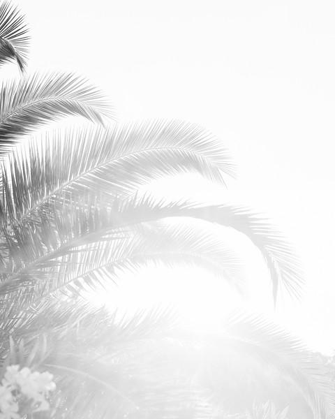 Palms 16x20-5