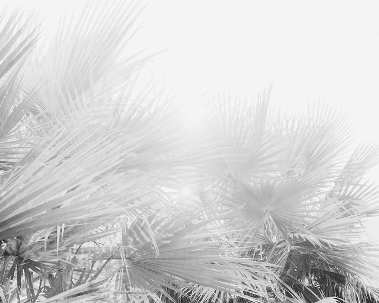 Palms 16x20-3