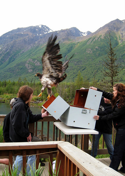 Photo by Ginny Smith / Eagle River Nature Center Volunteer