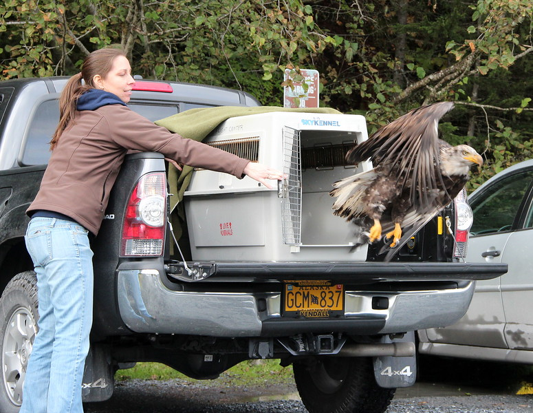 Heather's turn and her first eagle release with Bird TLC.