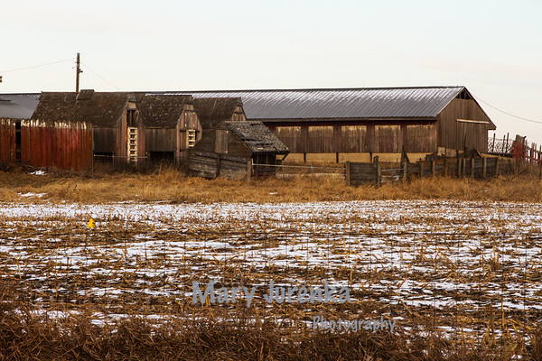 Abandoned Anderson Hog Farm in Hardin County, Iowa