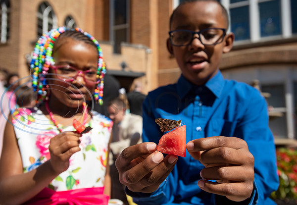 "Siblings Z'yunna Simmons, 5, and Jae-Tean Hampton, 12, feed watermelon to newly released butterflies during the Family Easter Celebration and Butterfly Release held at Marvin United Methodist Church in downtown Tyler on Sunday April 21, 2019. Julie Brown, director of children's ministry, said that it's hard for children to understand an abstract idea like the resurrection of Jesus Christ from the tomb, but butterflies in their own transformation can be used as an illustration. ""The butterflies represent Jesus's resurrection, but they also represent new life for sinners,"" Brown said, ""When we accept Jesus into our lives, He changes us and we are then free to fly in new life.""   (Sarah A. Miller/Tyler Morning Telegraph)"