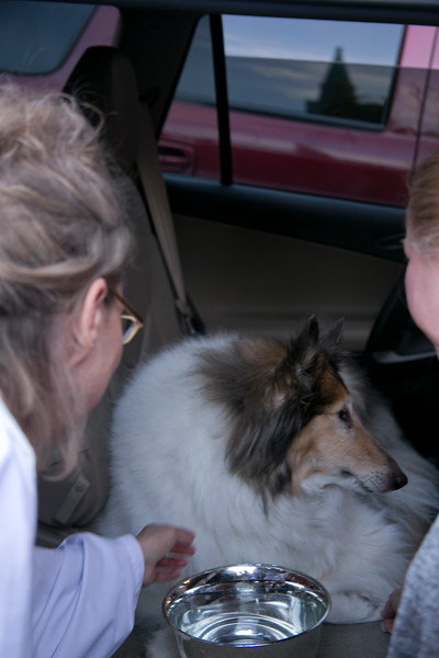 Blessing Of Animals_1622254