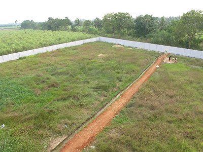 The 4.5 acre property is surrounded by a wall.  This is the back area, where the buffaloes (for milk) will be kept.