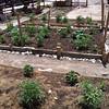 Neighborhood garden outside of the Columban House is cared for by the neighborhood.
