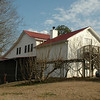 Back of house. Fig trees and muscadine vines.