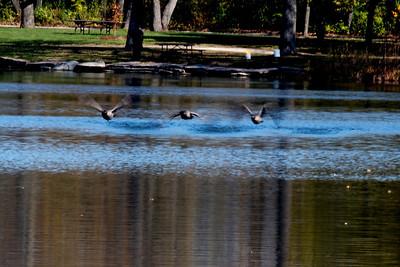 Herrick Lake - Nature Shabbat 2011