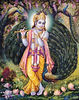 Krishna and Peacocks