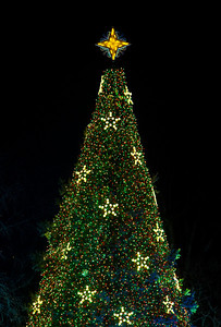 The National Christmas Tree is topped by a golden star. President Barack Obama and the First Family had just flicked the switch to light up the National Christmas Tree  before an estimated crowd of 17,000 on the Ellipse, just south of the White House in Washington D.C. on December 6, 2012  (Photo by Jeff Malet)