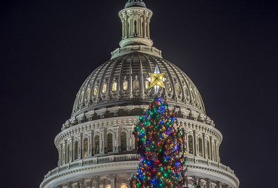 U.S. Capitol Christmas Tree
