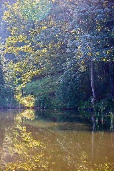 Pond in Morning Sunlight