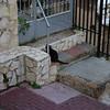 One of the many cats of Haifa