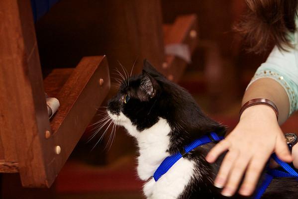 St. John's Pet Blessing Oct 7, 2012