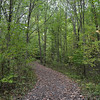 The Sacred Grove, Palmyra New York where the Father and the Son appeared to the boy Joseph Smith.