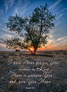 Prairie Tree Sunset Scripture