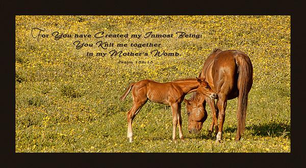 69700 Mare & Foal 10x20 Web