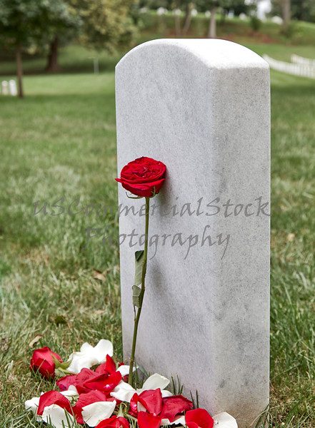 A Blank Headstone with a Rose